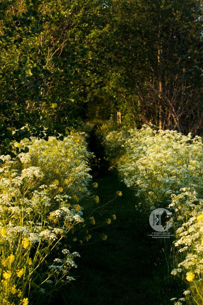 De omgeving van Gouda krijgt in de avond langzaamaan een oranje-gouden gloed.