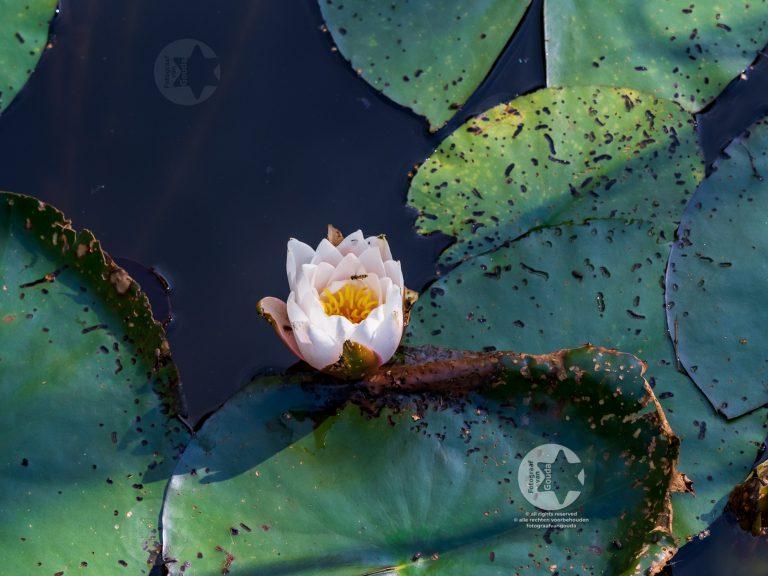 gouda-1608009-fotograafvangouda.jpg